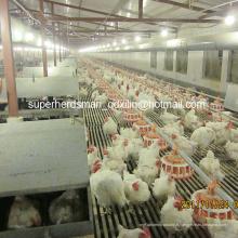 Équipement automatique de volaille pour la ferme de Breeder