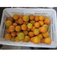 Exportación Profesional De Níquel De Calidad Superior Naranja