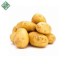 Ферме свежих органических картофеля с дешевым ценой