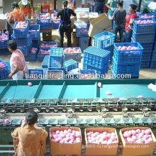 Китайские фьюжн фруктовые