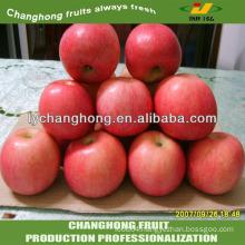 wax Apple in China