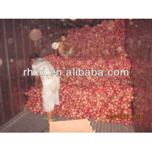 fresh red onion export india