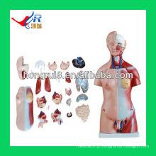 45cm, peças do modelo de torso unisex, modelo de corpo humano