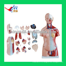 45cm, части модели туловища Unisex, модель человеческого тела