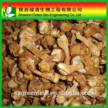 High quality Agaricus Blazei Extract Powder