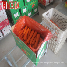2017 fresh carrot Korea market