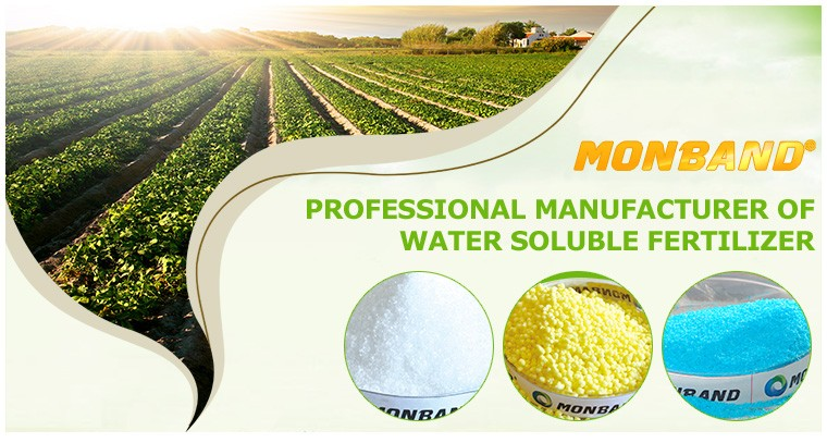 NPK 13-40-13+TE water soluble fertilizer