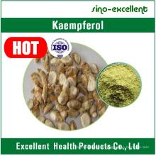 High Quality Natural Kaempferol Powder
