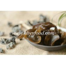 Champignon noir, oreille de bois, champignon