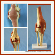 Deluxe Functional Knee Joint Model Life Size