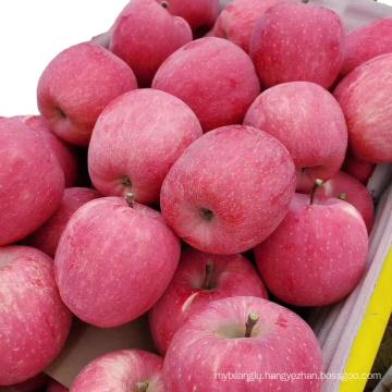 2021 Fuji Apple Red Fuji Apple For Export fuji apple factory