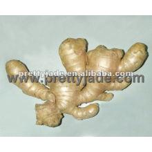 air dry fresh ginger