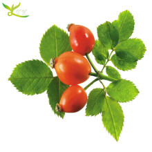 Tonking Manufacturer Herbal Supplement Rosehip Extract Rose Hips Extract Powder