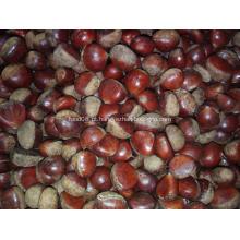 Colheita Chinesa de Alta Qualidade Fruta Fresca de Castanha