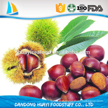 Hot selling chestnut with shell with low price
