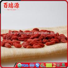Pianta di goji berry goji benefícios para a saúde de bagas de goji