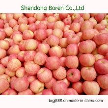 2015 Neue hochwertige frische Apfel