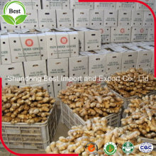 Wholesale Cheap Whole Dry Ginger