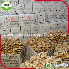 Низкие цены Китайский свежий имбирный сушеный имбирь