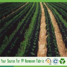 Tela no tejida del paisaje de China Agriculture Spunbond PP