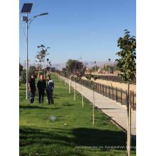 Garantía de venta superior de 5 años Luz de calle solar ajustable