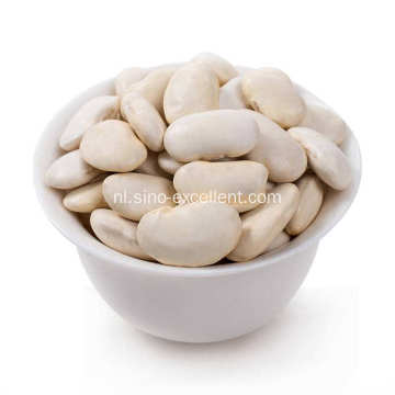 White Kidney Bean P. E