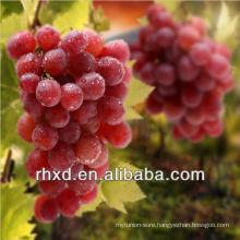 Fresh red grapes/China hongti grapes