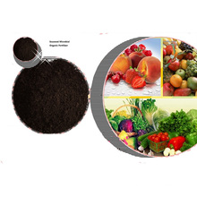 High Purity Organic manure/ Seaweed Extract Powder