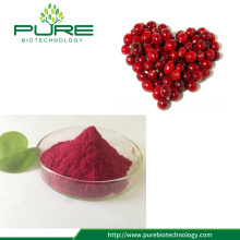 Natural Cranberry Extract Juice Powder