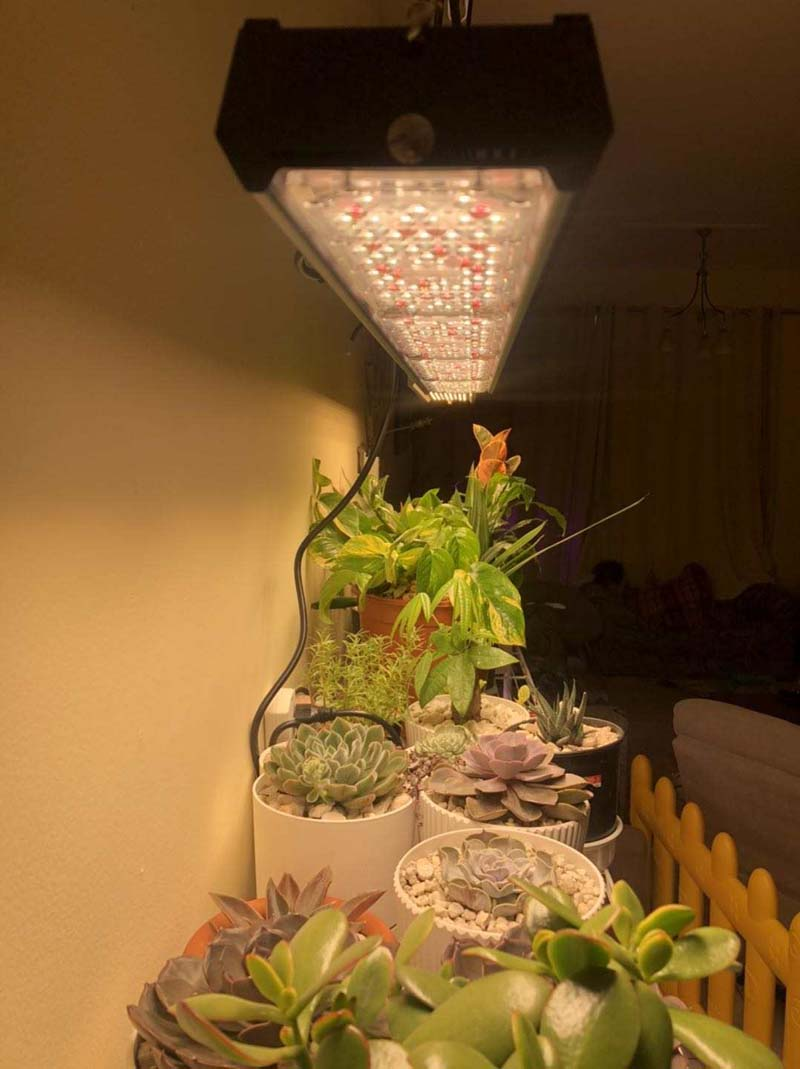 led grow light for potted plant