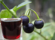 a Natural Belladonna Liquid Extract