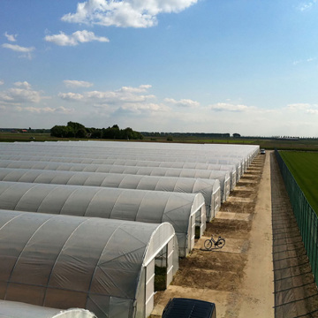 Agriculture Tunnel PE Polytunnel Greenhouse for sale