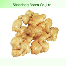 2015 New Fresh Ginger From Shandong