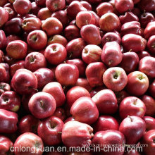 Embalagem de 20kg Red Fresh Delicious Apple