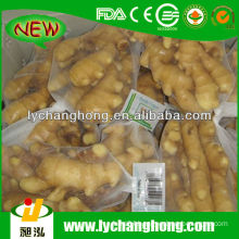 2014 Chinese Fresh Ginger
