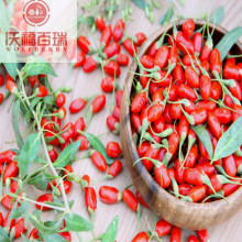 Wolfberry / Lycium Barbarum / Hot Sale Goji Berry