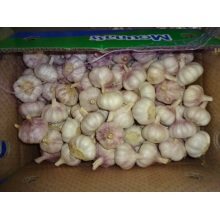 2020 New Sason Normal White Garlic