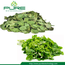 Pure Natural Dried Moringa Leaves