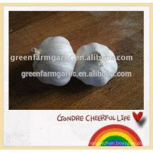 jinxiang fresh white garlic esport