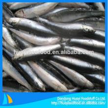 Perfect fresh frozen anchovy seafood para venda
