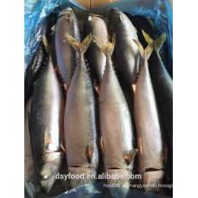 Gefrorene Pazifik Makcer / Chub Makrele