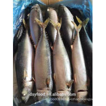 Frozen pacific makcerl/chub mackerel