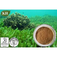Natural 100% Spirulina Powder