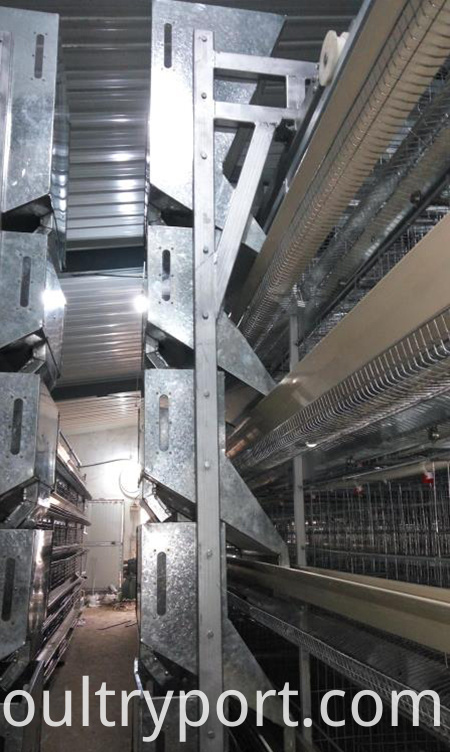 Automatic Chicken Feeding System Chicken Farming Equipment