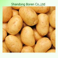 Venta caliente, patata fresca china alta guality