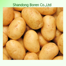Hot Sale, Chinese Fresh Potato High Guality