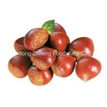 2016 castanha fresca orgânica chinesa