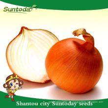 Suntoday vegetal F1 jardín orgánico que compra en línea el proveedor de estante largo de las semillas de la cebolla amarilla (81003)