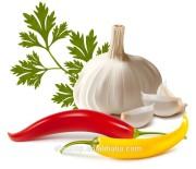 BNP Supply high quality best price garlic powder extract