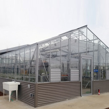 Professional for Glass Venlo Greenhouse Venlo Glass Greenhouse for Vegetables or Flowers export to Mayotte Exporter